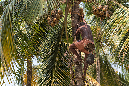 Coconut Farmers